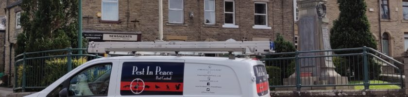 Pest in Peace van local